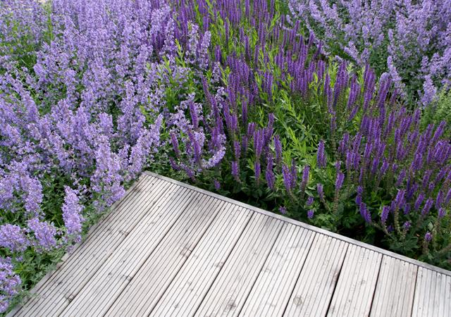 Terrassen aus Holz zeigen eine warme Atmosphäre.