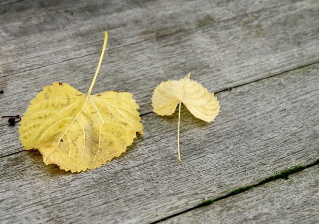 Holzbau und Gartennatur passen ideal zusammen.
