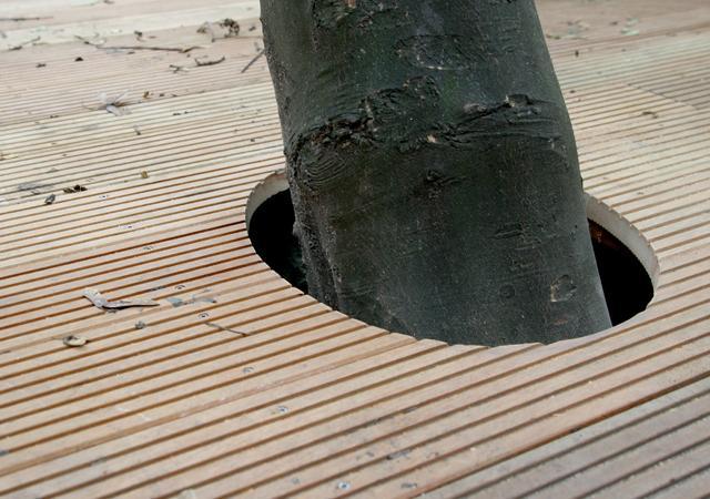 Bäume können in Holzdecks integriert werden.