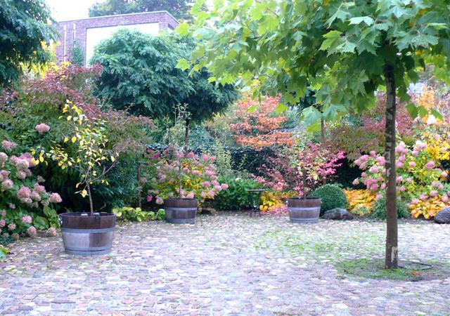 Fertige Hoffläche mit Schirm-Platane.