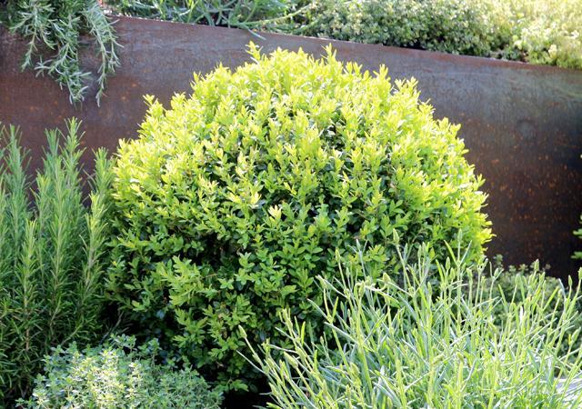 Rostbrauner Stahl dient als idealer Hintergrund für grüne Pflanzen.