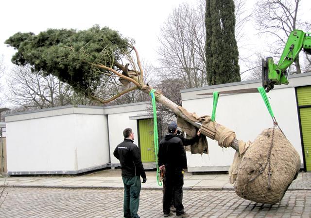 Solitäre Großbäume verleihen jedem Garten gewachsene Struktur.