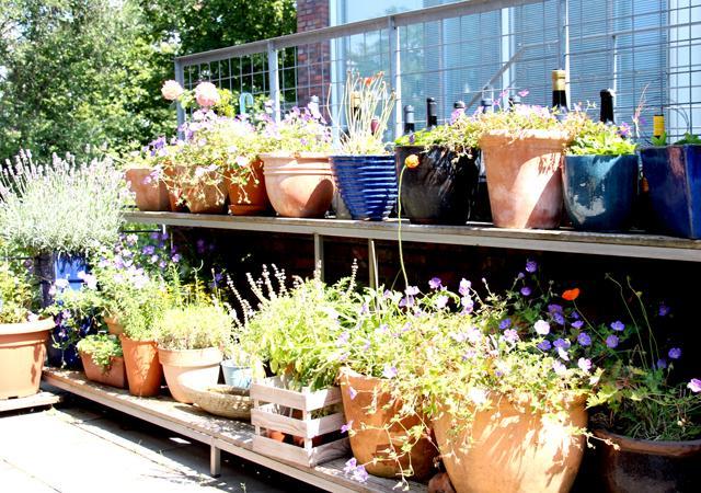 Topfgarten mit gestaffelter Blumenbank.