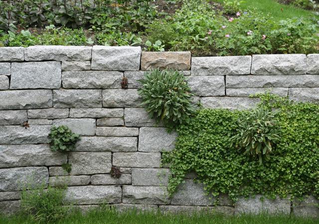 Natursteinmauer mit bepflanzten Fugen.