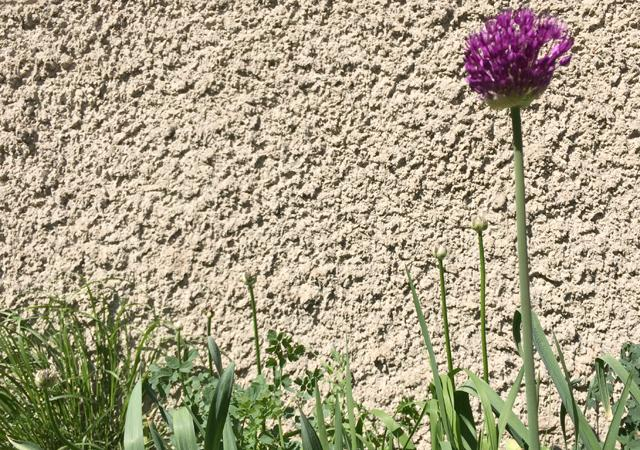 Gartennatur vor roh verputzter Gebäudewand